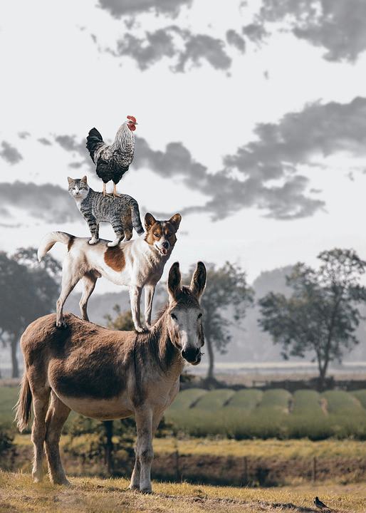 Zwierzęta - Kortowo Hotel