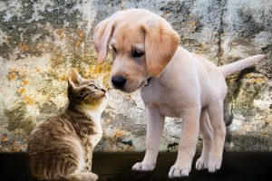 Pies i kot - Kortowo Hotel